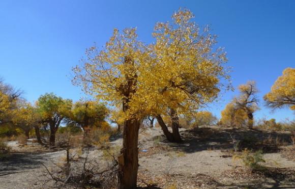 Photo Image Amp Picture Of Gobi Desert Plants